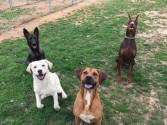 DogPlayGroups.com