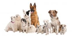DogPlayGroup.com